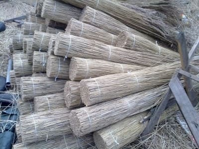 Reed for roofs